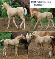 6 20 07 CollageRockfilly